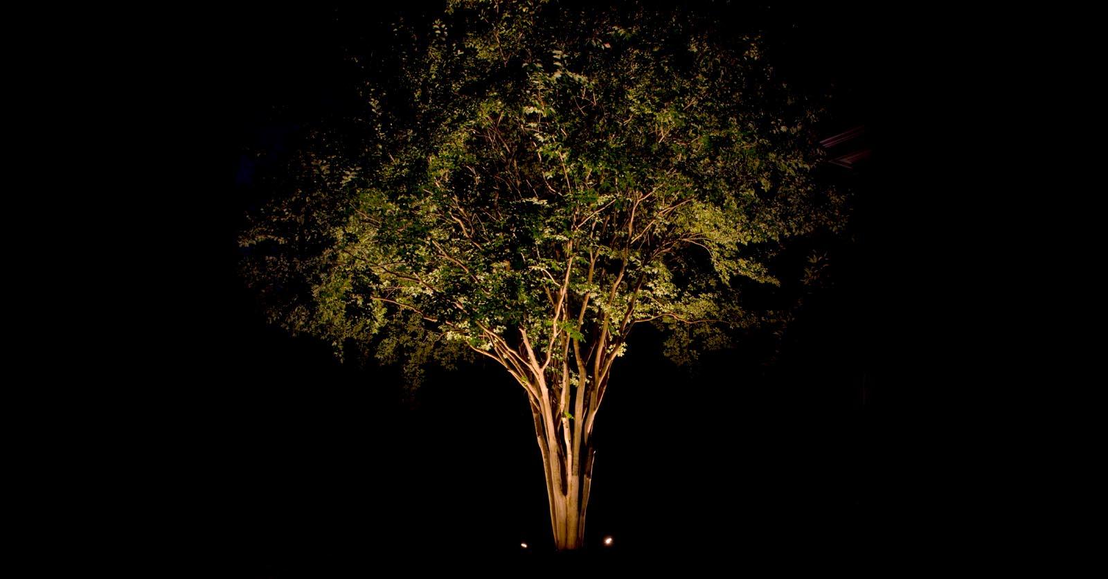 path light spotlight company williamsburg