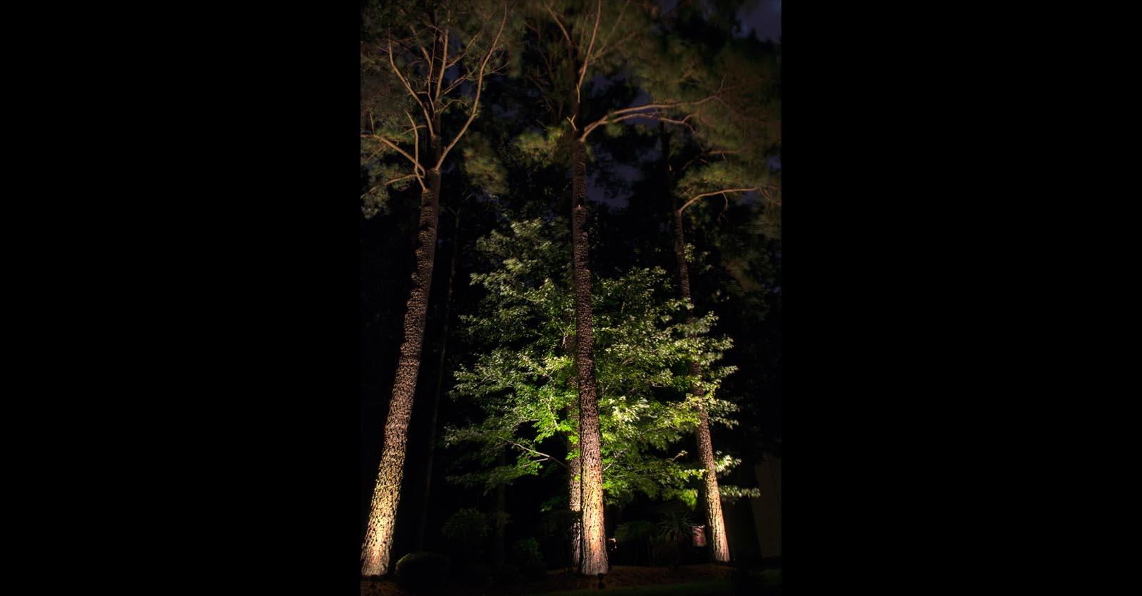 tree lighting chesapeake