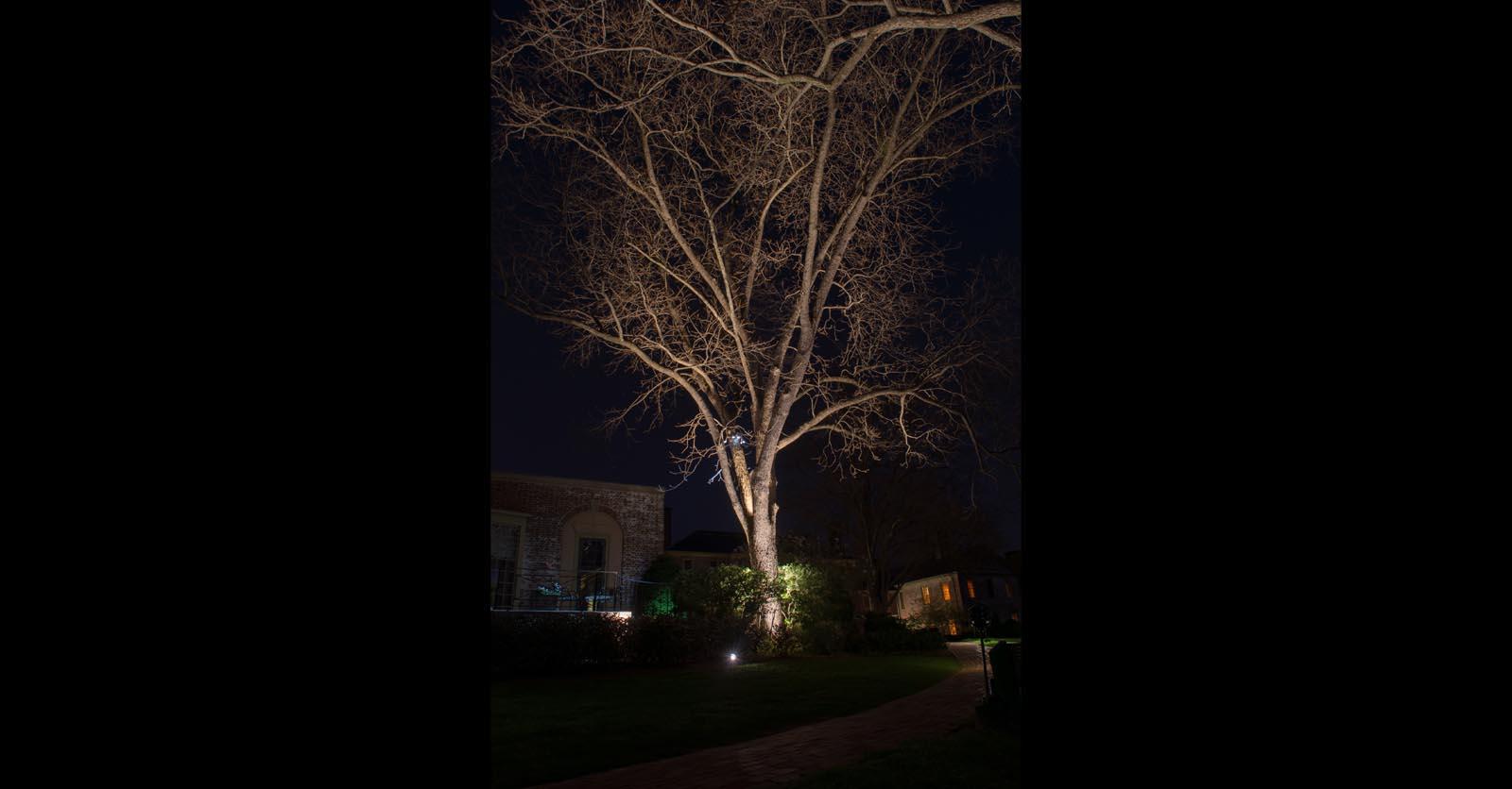 yard feature lighting hampton